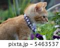 子猫 5463537