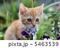 子猫 5463539