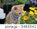 子猫 5463541