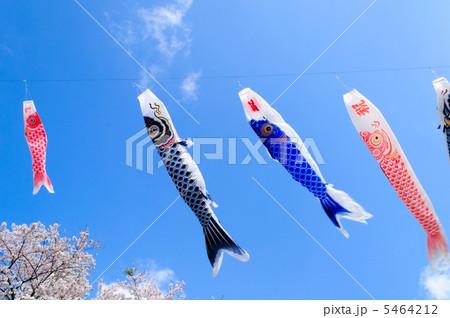 鯉のぼりと桜 5464212