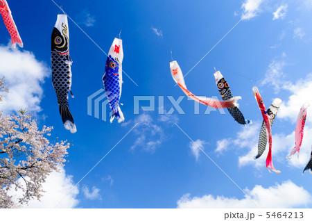 鯉のぼりと桜 5464213