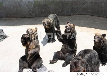 阿蘇カドリードミニオンの熊たち 5465969