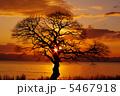 琵琶湖湖岸の木 5467918