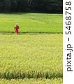 稲作 田園 田んぼの写真 5468758