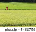 稲作 田園 田んぼの写真 5468759