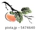 果実 かき 果物のイラスト 5474640