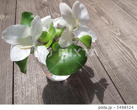 ジンジャー(白)で香りのアレンジ 5498524