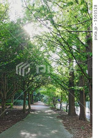 夏の木漏れ日 5503528