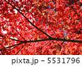 鎌倉の紅葉 5531796