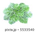 緑黄色野菜 葉 野菜のイラスト 5533540