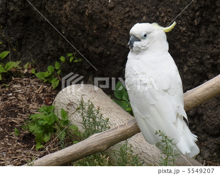 動物たちのつぶやきの写真素材 [5549207] - PIXTA
