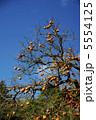 柿 カキ 柿の実の写真 5554125