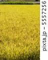 【A3対応】黄金咲く稲穂 1 5557256