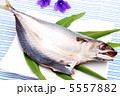 開き サバ 鯖の写真 5557882