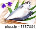 開き サバ 鯖の写真 5557884
