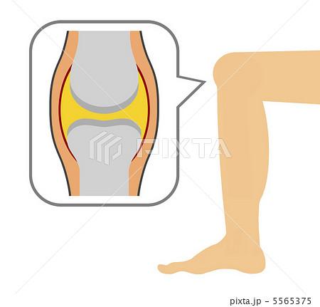 膝関節のイラスト素材 5565375 Pixta