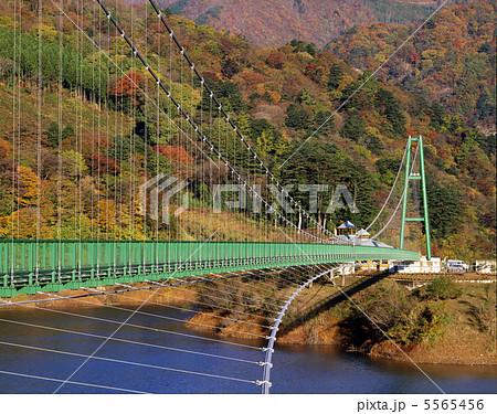 もみじ谷大吊橋 5565456