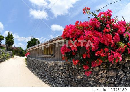 竹富島の集落風景 5593189
