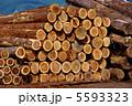 杉の木 伐採木 木材の写真 5593323