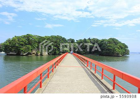松島の福浦島 5593938