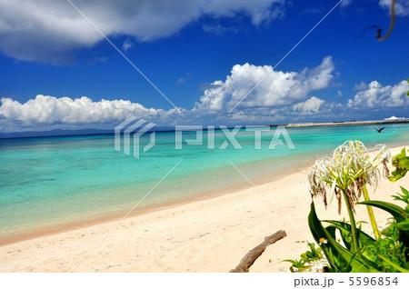 波照間島 コバルトブルーの海ニシハマ 5596854