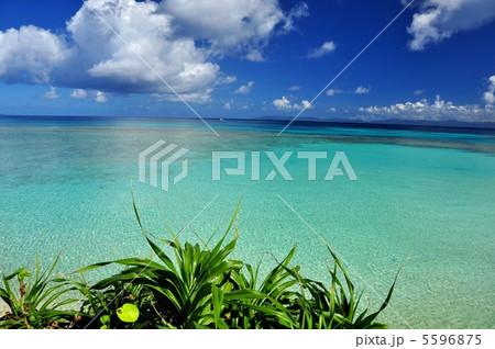 波照間島 ニシハマ 波照間ブルー 5596875