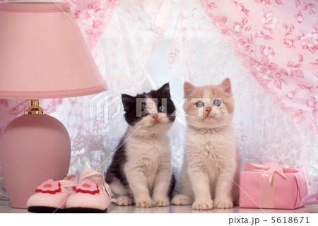 ランプと仔猫の写真素材 [5618671] - PIXTA