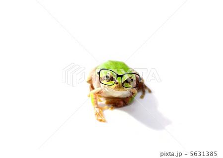 メガネをかけた カエル 5631385