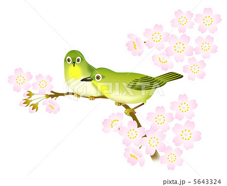 桜の花とメジロ 5643324