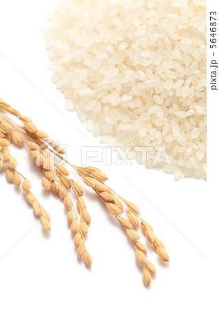 米と稲穂 5646873