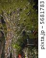 電飾 木 イルミネーションの写真 5681783