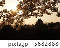 桜と大阪城 5682888