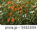 蜂の休息 5682889