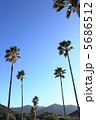 ヤシの木 ヤシ 椰子の木の写真 5686512