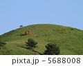 野生馬 丘 馬の写真 5688008