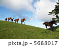 野生馬 丘 馬の写真 5688017