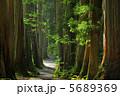 参道 戸隠神社 杉並木の写真 5689369