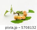 果実 種子 ギンナンの写真 5708132