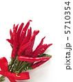 とうがらし 赤唐辛子 赤とうがらしの写真 5710354