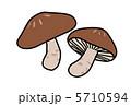 シイタケ しいたけ 椎茸のイラスト 5710594