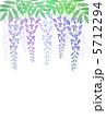 フジ 藤の花 フジの花のイラスト 5712294