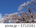 桜吹雪 5713381