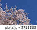 桜吹雪 5713383
