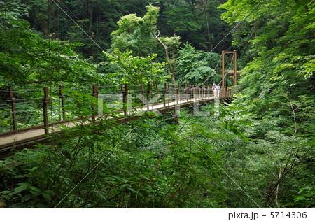 高尾山にかかる橋の写真素材 [57...