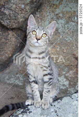 座る野良猫 5720524