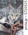 鎖と野良猫 5720525