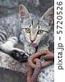 鎖と野良猫 5720526