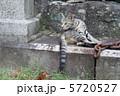 鎖と野良猫 5720527
