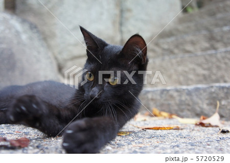 黒い野良猫 5720529