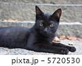 黒い野良猫 5720530